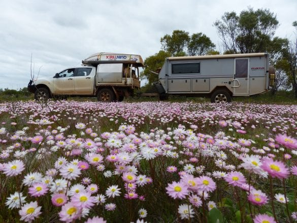 Peter & Narelle Mills - Carpets of wildflowers Mullewa WA